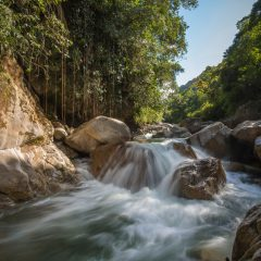El Tamá National Park,  – Buy Code VEN0006