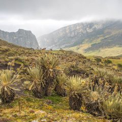 El Cocuy National Park– Buy Code COL0029