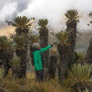 El Cocuy National Park – Buy Code COL0026