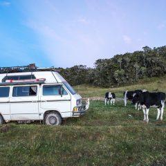 Parque Nacional Chingaza – Buy Code COL0031