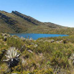 Parque Nacional Chingaza – Buy Code COL0033