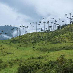 Cocora Valley – Buy Code COL0048