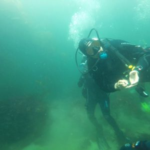 Diving in Monterey's Kelp Forest, CA – United States, North America