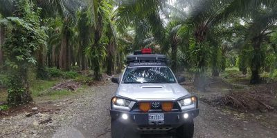 Driving Through Palm Oil Plantations – Costa Rica, Central America