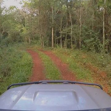 Jungle Backroads – Paraguay, South America